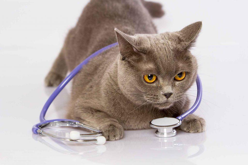 cat-lab