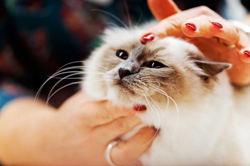cat-screening