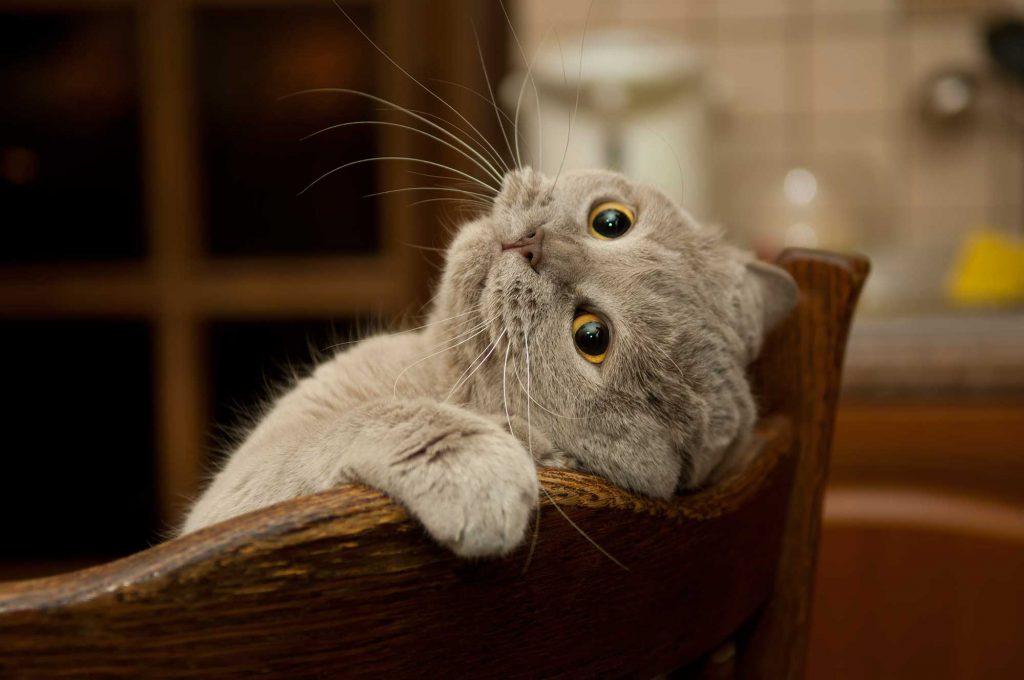 cat-wellness